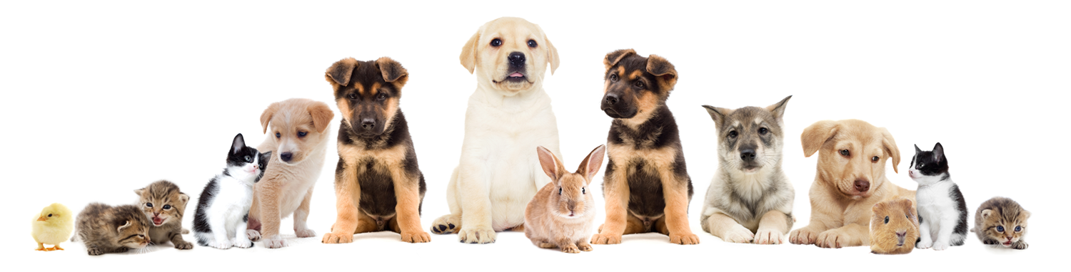puppies, kittens, rabbits, guinea pigs at Filey vets